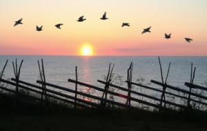 bird formation